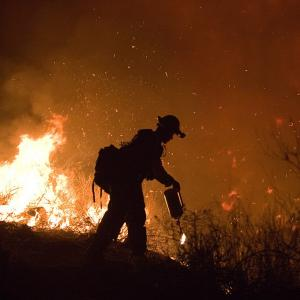 How rewilding can help tackle wildfires raging across Europe