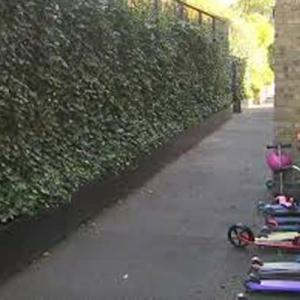 Call for living walls to be installed in polluted schools