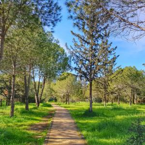 Meet us at the forest - Nicosia Connecting Nature Public Event