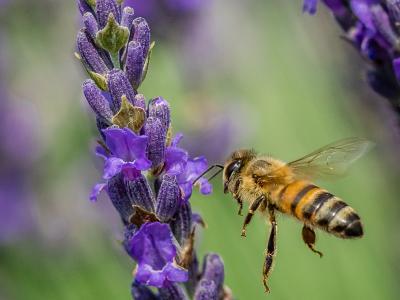 HONOR A: MS. KATIA IOANNOU- Planting A Bee Garden